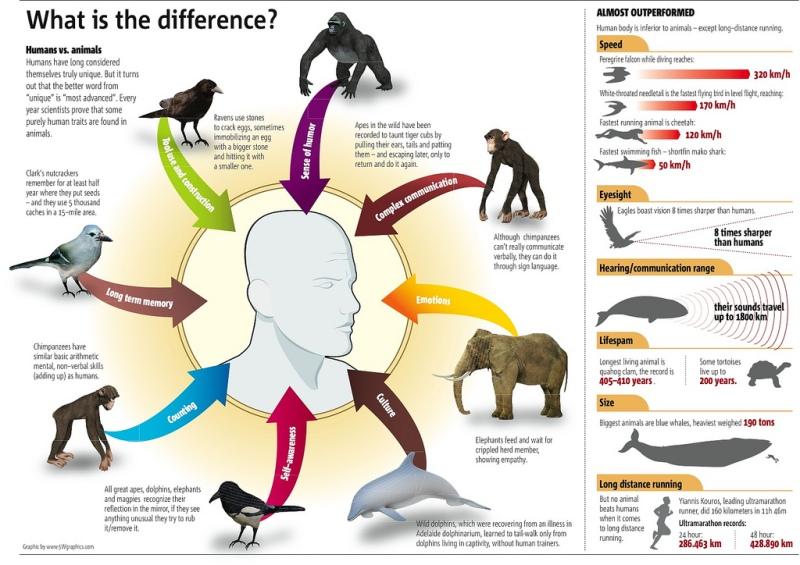 Diferenciación en el Reino Animal